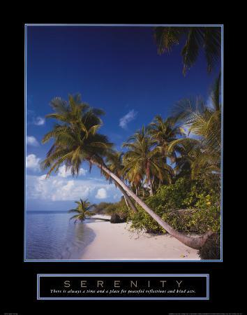 serenity-palm-trees
