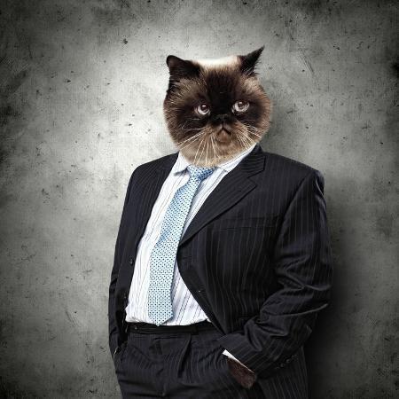 sergey-nivens-funny-fluffy-cat-in-a-business-suit-businessman-collage