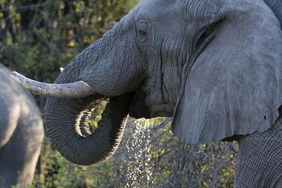 sergio-pitamitz-african-elephant-loxodonta-africana-khwai-concession-okavango-delta-botswana-africa