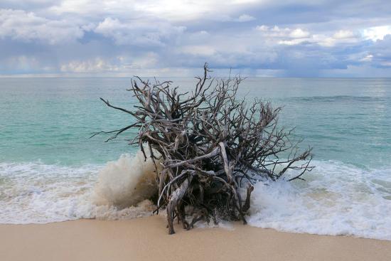 sergio-pitamitz-denis-island-seychelles