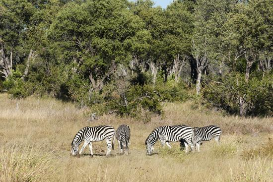 sergio-pitamitz-khwai-concession-okavango-delta-botswana