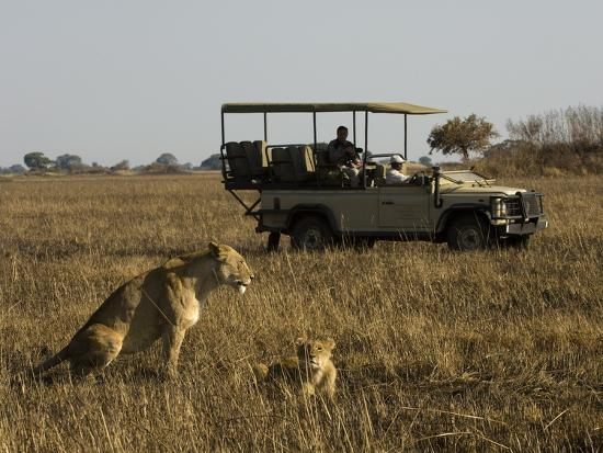 sergio-pitamitz-tourist-taking-pictures-of-lioness-and-cub-busanga-plains-kafue-national-park-zambia-africa