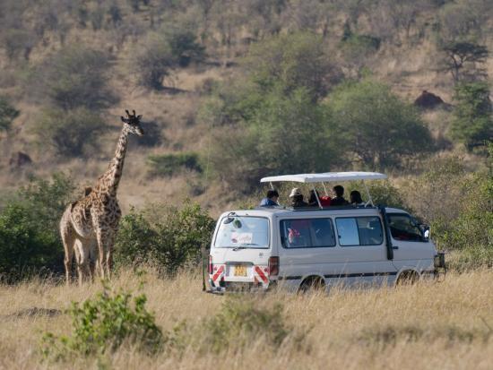 sergio-pitamitz-tourists-on-safari-watching-giraffes-masai-mara-national-reserve-kenya-east-africa-africa