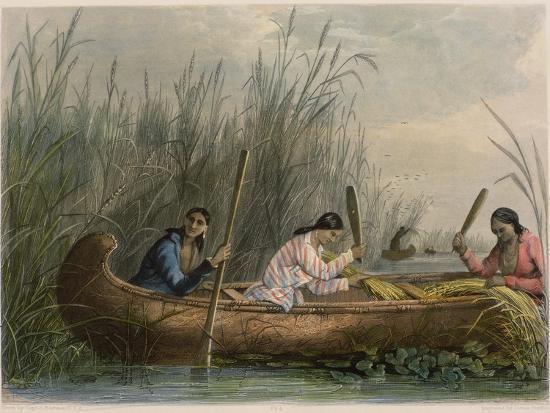 seth-eastman-gathering-wild-rice