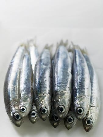 several-fresh-anchovies