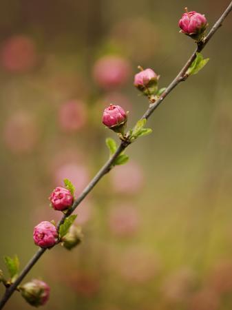 shayne-hill-flowers-near-shizunai