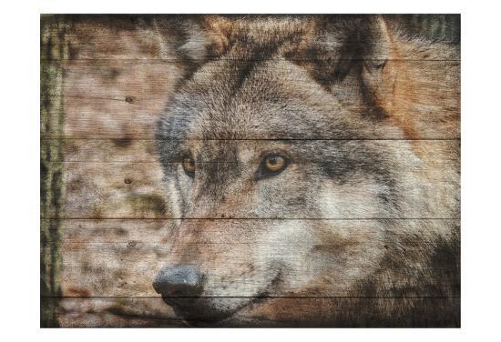 sheldon-lewis-alfa-wolf-2
