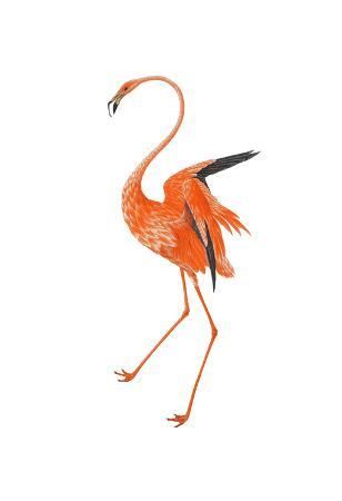 sheldon-lewis-orange-flamingo