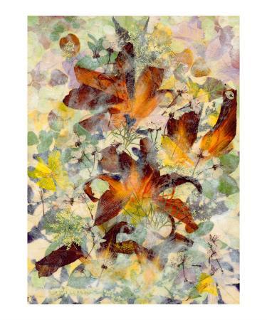 shelley-xie-orange-splendor