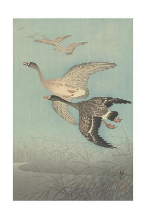 shozaburo-watanabe-white-fronted-geese-in-flight-1925-36