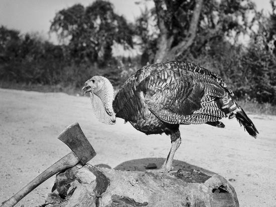 side-profile-of-a-turkey-and-axe-on-a-tree-stump