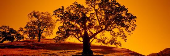 silhouette-of-california-oaks-trees-central-coast-california-usa