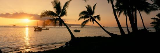 silhouette-of-palm-trees-at-dusk-lahaina-maui-hawaii-usa