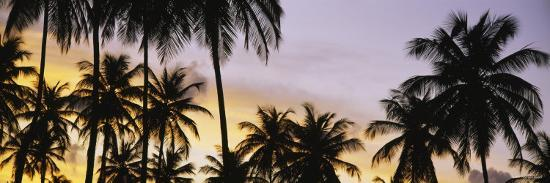 silhouette-of-palm-trees-at-sunset-pigeon-point-beach-tobago