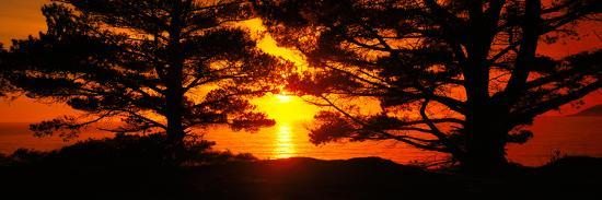 silhouette-of-trees-on-the-coast-big-sur-california-usa