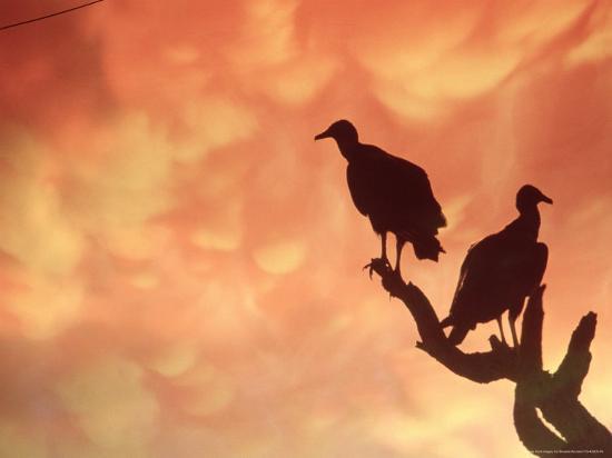 silvestre-machado-silhouetted-vultures-serra-dos-orgaos-national-park-brazil
