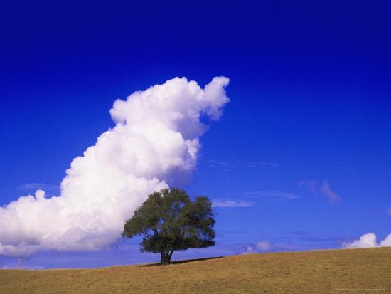 silvestre-machado-tree-and-cloud-atlantic-wood