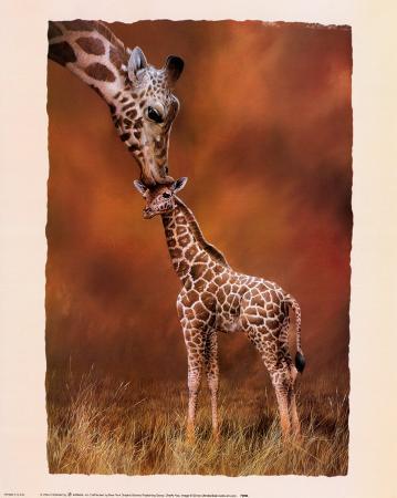 simon-mendez-giraffe-kiss
