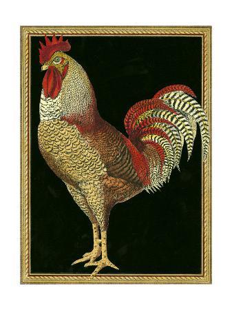single-rooster-ii