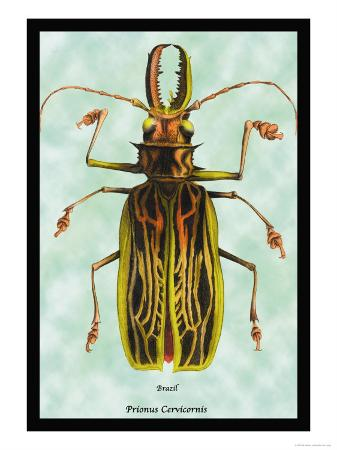 sir-william-jardine-beetle-brazilian-prionus-cervicornis