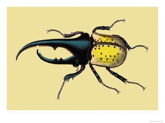 sir-william-jardine-horned-beetle