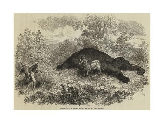 sketches-of-south-african-travel-the-lion-and-dead-elephant