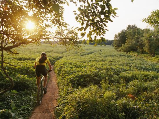 skip-brown-a-cyclist-rides-on-a-trail-through-a-soybean-field