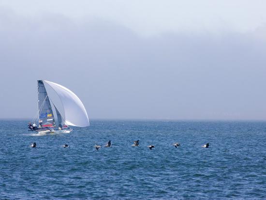 skip-brown-international-14-skiff-races-in-san-francisco-bay-with-pelicans