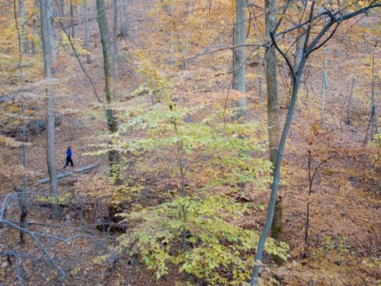 skip-brown-woman-runs-on-a-trail-through-eastern-hardwood-forest-in-the-fall