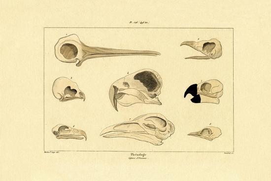 skulls-1833-39