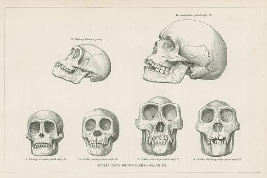 skulls-from-photographs
