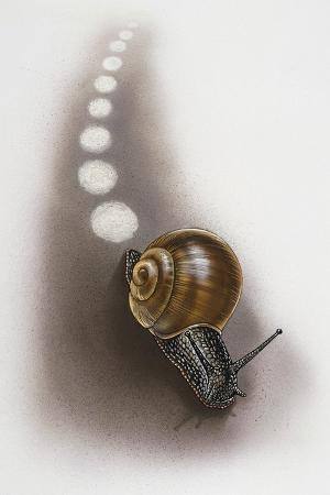 snail-leaves-trail-on-ground-artwork-by-robin-carter