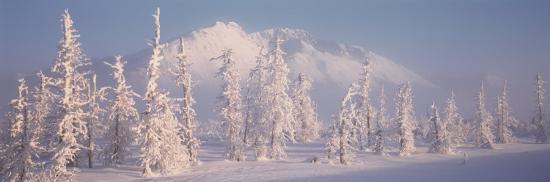 snow-covered-landscape-hoarfrost-on-trees-chugach-mountains-alaska-usa