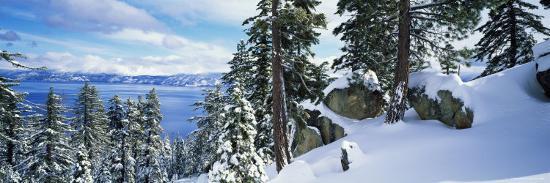 snow-covered-trees-on-mountainside-lake-tahoe-nevada-usa