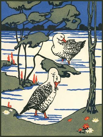 snow-geese-wading-in-pond