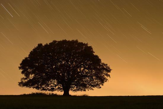 solvin-zankl-english-oak-tree-quercus-robur-silhouetted-against-orange-sky-with-star-trails