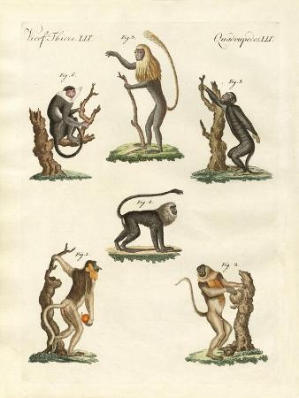 some-kinds-of-monkeys