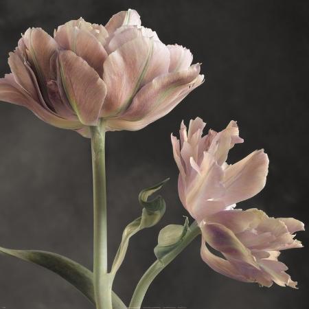 sondra-wampler-tulip-ii