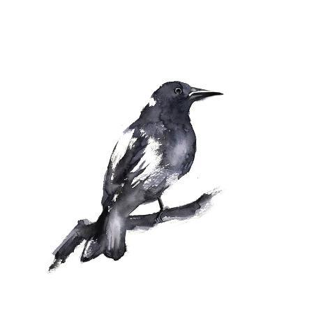 sophia-rodionov-black-crow