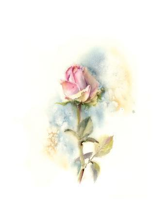 sophia-rodionov-rose-i