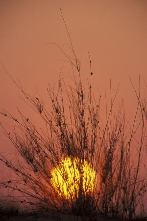 south-africa-dune-with-dune-grass-at-sunset