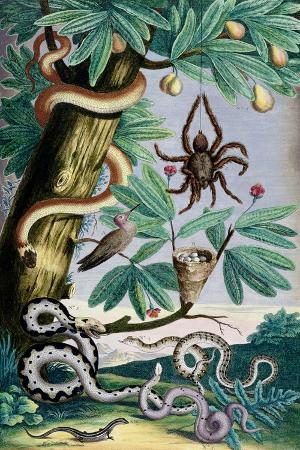 spiders-and-snakes-from-albert-seba-s-locupletissimi-rerum-naturalium-c-1750