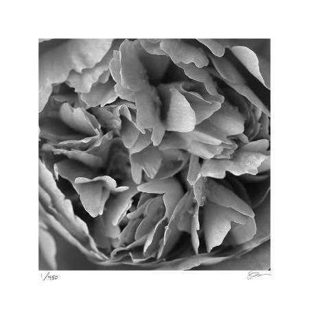 stacy-bass-botanical-study-15