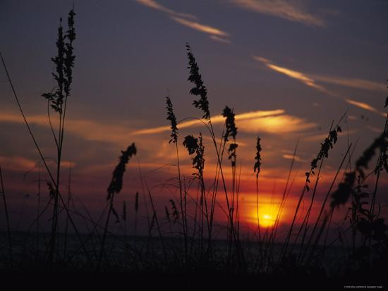 stacy-gold-sea-oats-blow-in-the-breeze-as-the-sun-sets-over-the-gulf-of-mexico-holmes-beach-florida
