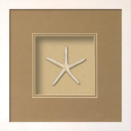starfish-shadowbox-sand