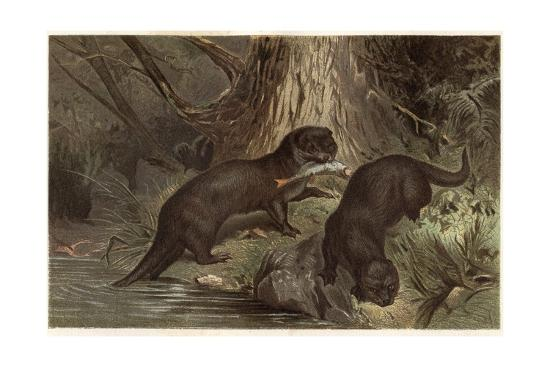 stefano-bianchetti-the-southern-river-otter-by-alfred-edmund-brehm