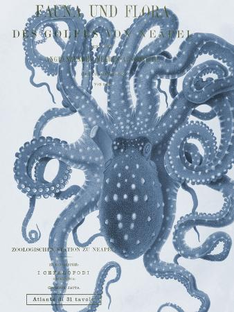 stephanie-monahan-sea-creatures-sorrento