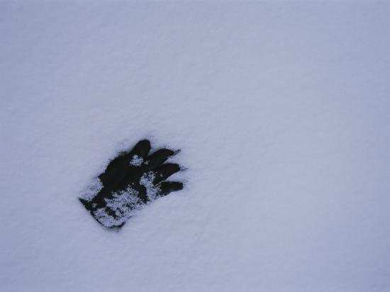 stephen-st-john-a-black-glove-contrasts-with-the-falling-snow-starting-to-cover-it