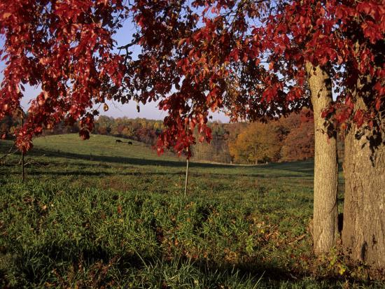 stephen-st-john-autumn-color-frames-the-rolling-hills-of-the-virginia-foxhunt-country