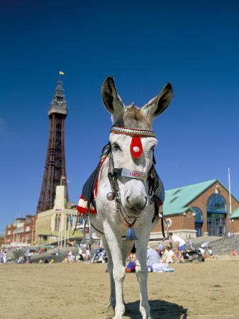 steve-ann-toon-seaside-donkey-on-beach-with-blackpool-tower-behind-blackpool-lancashire-england